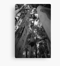 Tall Timber Canvas Print