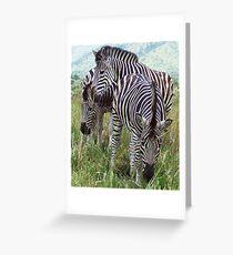 Zebra Crossing Greeting Card