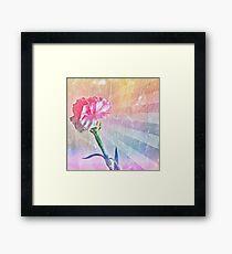 Pastel Carnation Framed Print