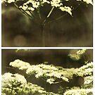 (Meadow) Sweet (Dreams) by Sybille Sterk
