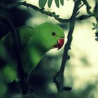 Parakeet by Deborah Durrant