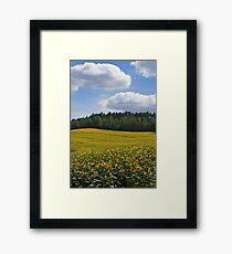 Sunflowers Framed Print