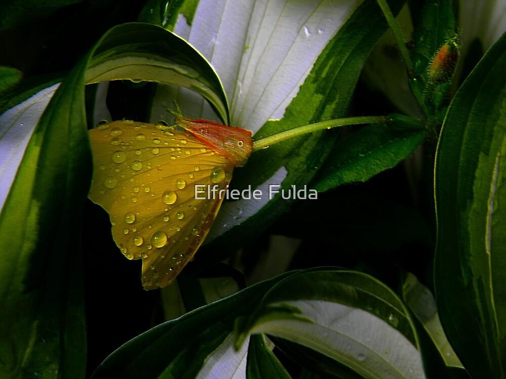Protected ! by Elfriede Fulda