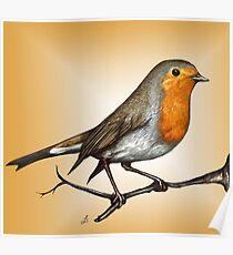 Robin bird Poster