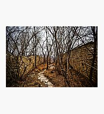 A Forest on the Great Wall Photographic Print