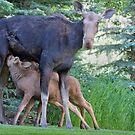 Déjeuner Sur L'Herbe... Moose Twins by A.M. Ruttle