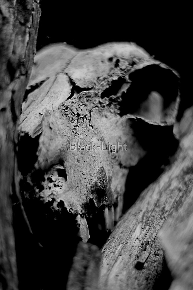 Deaths Head by Black-Light