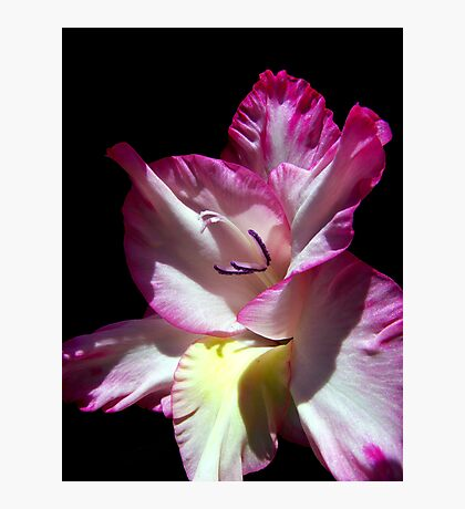 Gorgeous Gladiola  Photographic Print