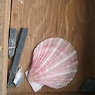Pink shell by abigcat