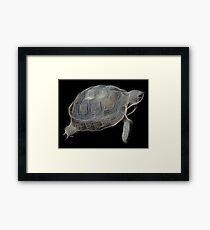 Medicine Wheel Totem Animals by Liane Pinel- Tortoise Framed Print