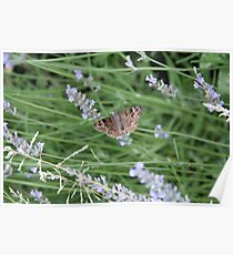 Summer Wings - Horace's Duskywing Poster