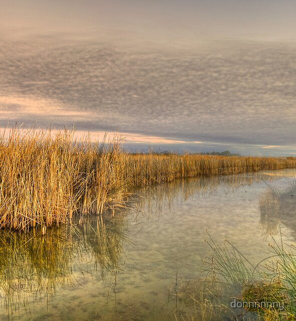 Wind in the reeds by donnnnnny