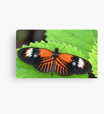 Butterfly on jagged leaf Canvas Print