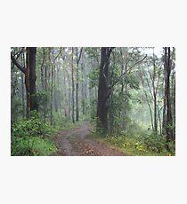 Fog in the Bush Photographic Print