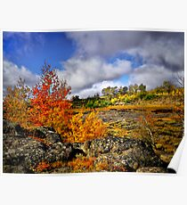 Fall in the Steens Poster