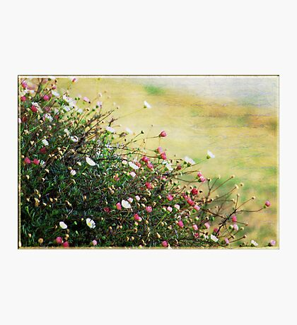 Say it with Flowers Photographic Print