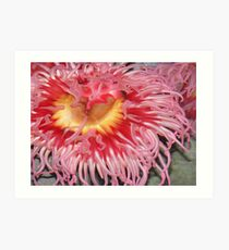 Anemone. Art Print