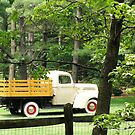 Old Ford Truck by Maryann Harvey
