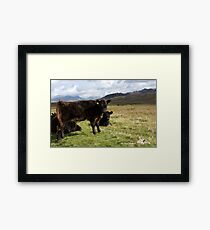 Mountain Cows Framed Print