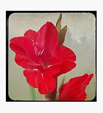 Red Gladiola Photographic Print