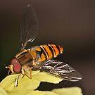Pollination 29 by Gareth Jones