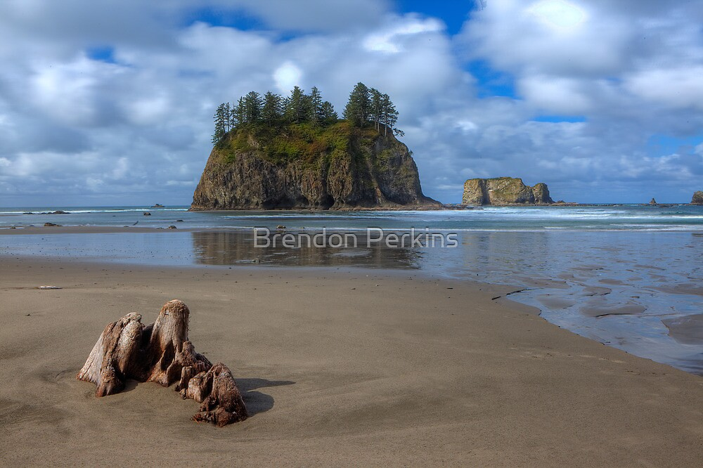 Cypress in the Sand (La Push, Washington) by Brendon Perkins