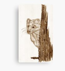 Pine Marten in pencil Canvas Print