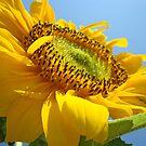 Yellow SunFlower Flower Garden art print Baslee Troutman by BasleeArtPrints