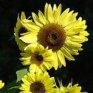 Sunflowers art prints Beautiful Summer Sunflower Garden by BasleeArtPrints