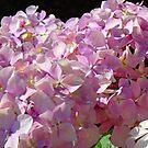 Hydrangea Flowers Pink Floral art prints Baslee Troutman by BasleeArtPrints