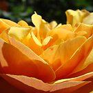 Orange Rose Flower art prints Roses Garden Floral by BasleeArtPrints