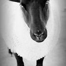 sheep von Marianna Tankelevich