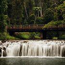 Malanda Falls by Tanya Rossi
