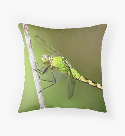 Common Pondhawk in Summuer Throw Pillow