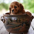 Potted Puppy (3) by Tanya Rossi