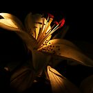 Shades of light by browncardinal8