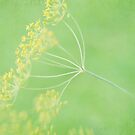 Dill In Texture by Linda Trine