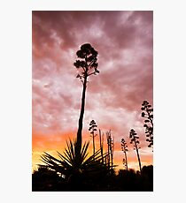 Agave Sunset Photographic Print