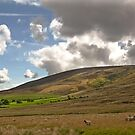 Trough Of Bowland by John Hare