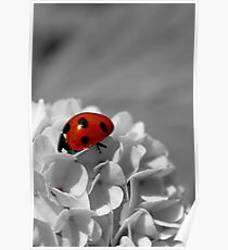 Lady Bug Sc Poster