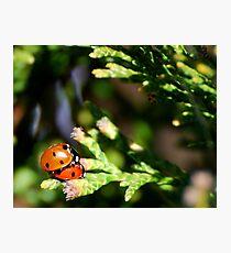Love Bugs Photographic Print