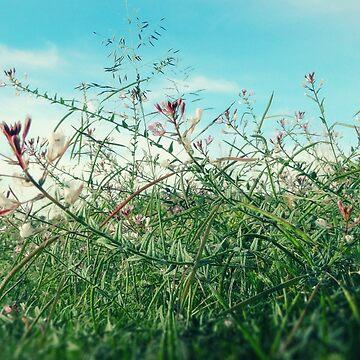 Field Wild Flowers by StudioDavis