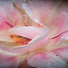 Wild Rose © by Dawn Becker