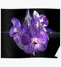 Purple Webs Poster