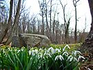 Snowdrops in the Park by MotherNature