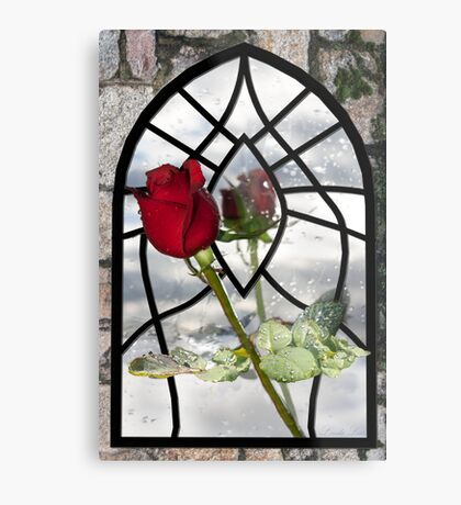The Timeless Beauty of a Red Rose Metal Print