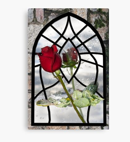 The Timeless Beauty of a Red Rose Canvas Print