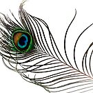 Peacock Feather by ©FoxfireGallery / FloorOne Photography