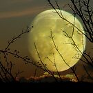 By Moonlight..... by naturelover