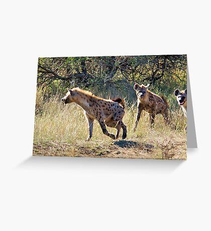 HYAENA ON THE HUNT - Spotted Hyaena - Crocuta crocuta Greeting Card